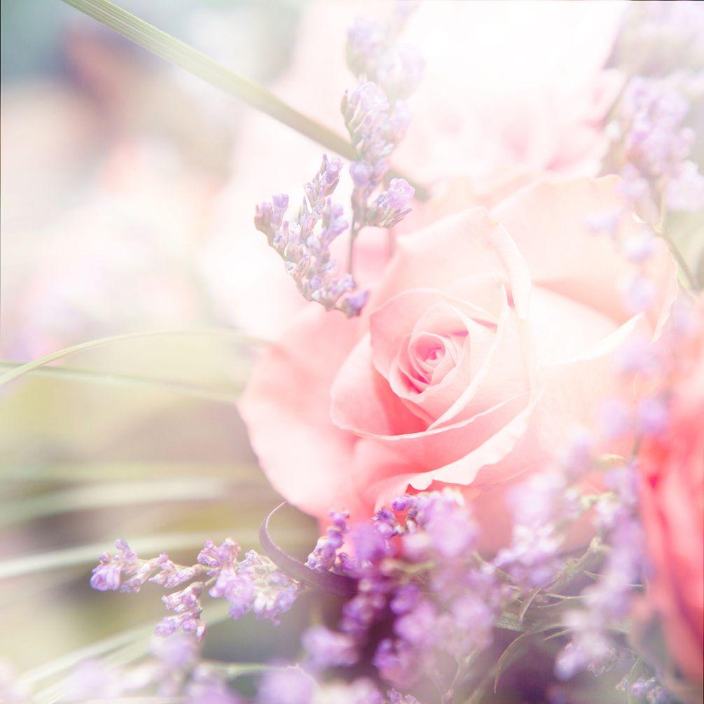 чая открытка с нежно розовыми цветами предрекают