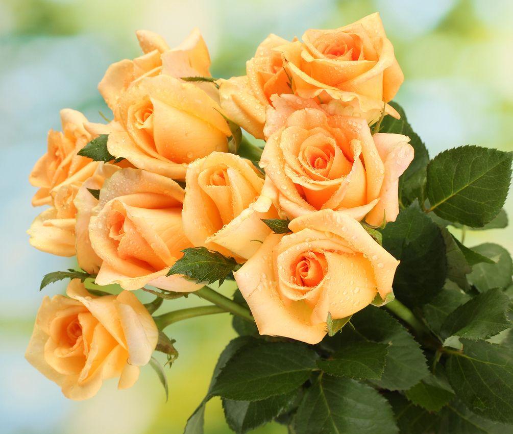 розы открытки фотографии собрала