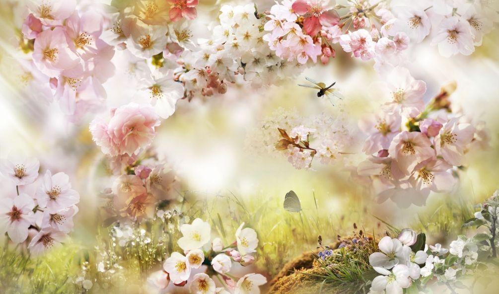 Моей любимой, картинка нежные цветы для фотошопа