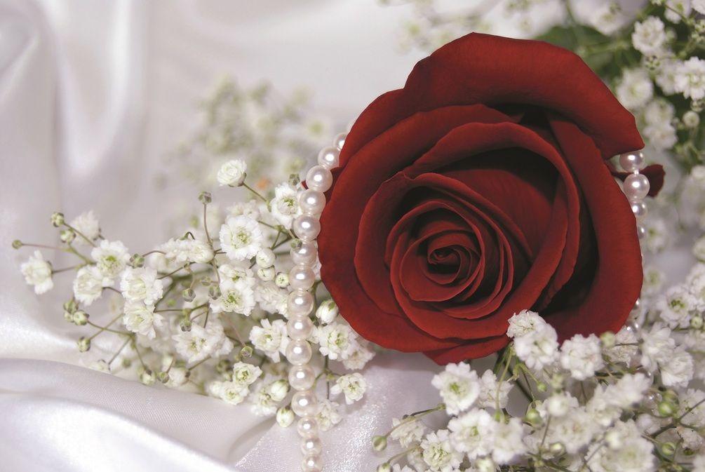 Лет, картинки для ватсапа цветы
