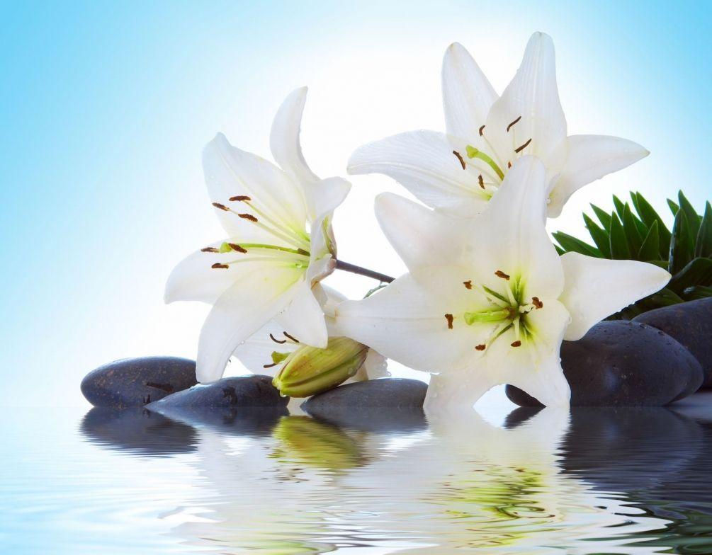 Фотообои Белые лилии на воде