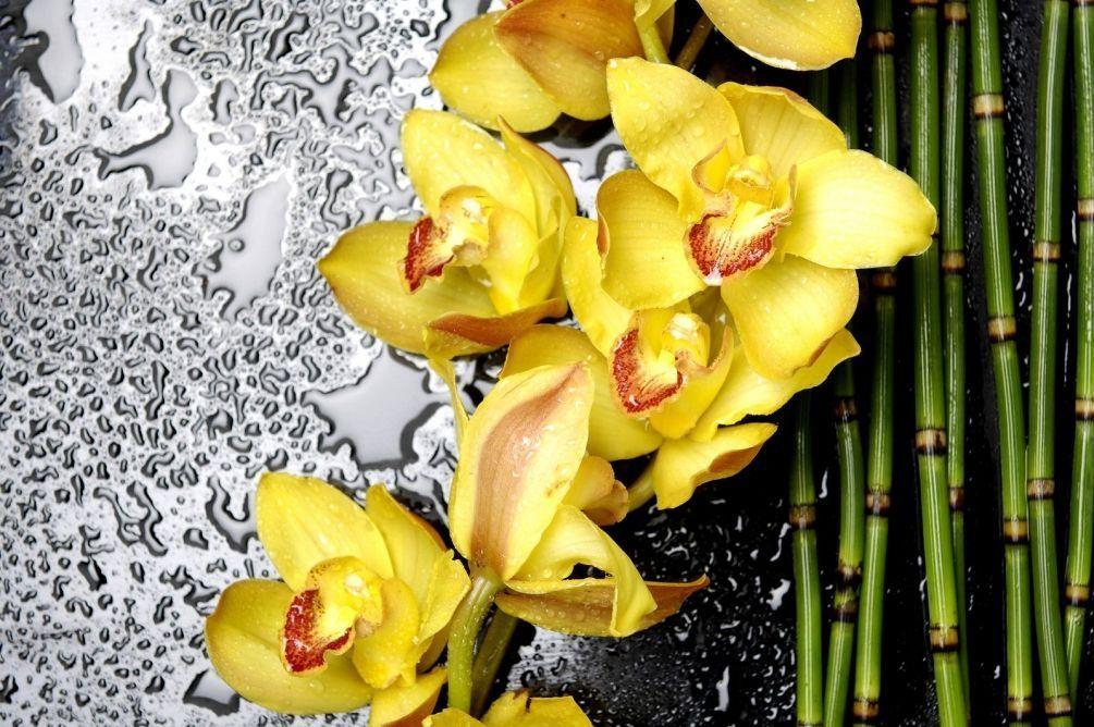 штукатурка фото на стекле ветки орхидеи воды интересно